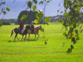 Pferdeglueck Altmark Urlaub mit Hund und Pferd