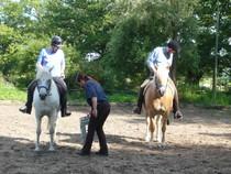 Natural Horsemanship Pferdeflüsterer