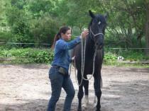 Pensionspferde / Ausbildungspferd